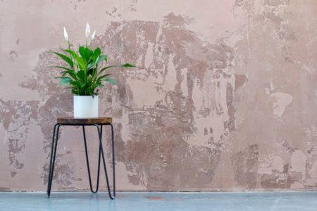 plantas para tu hogar